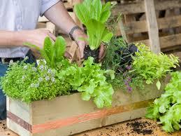 Herb Garden Kitchen Window Make A Window Box Of Herbs And Lettuce Hgtv