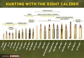 Hunter Safety System Size Chart 22 Symbolic Rifle Calibers By Size Chart