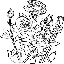 coloring book flowers rose flower in the garden coloring page art coloring book spring flowers