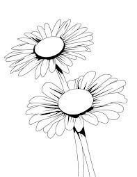 Small Picture Blooming Daisy Flower Coloring Page Download Print Online