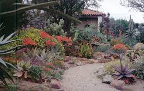 the desert garden with a view to the pavilion aloe striata flowers to the left