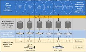 Blue Catfish Length Weight Chart Frontiers Comparison Of Channel Catfish And Blue Catfish