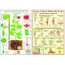 Tree Root Size Chart Botany Charts