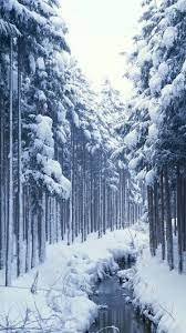 Aesthetic Snowy Forest Iphone Wallpaper ...