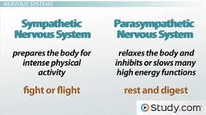 The Sympathetic And Parasympathetic Nervous Systems Video