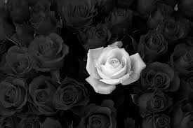 black and white flowers tumblr photography. Wonderful And Feeling To Black And White Flowers Tumblr Photography A
