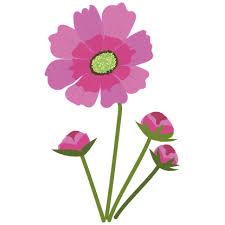 花コスモスの かわいい フリー イラスト 商用フリー無料のイラスト