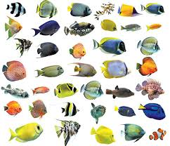 if you ve started sneezing at the onset of winter you re finned aquarium friends are susceptible too aquarium fish may acquire various diseases around the