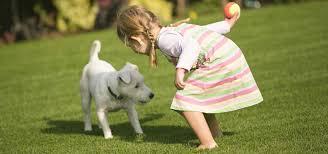 artificial grass for pets. Artificial Grass For Dogs \u0026 Pets 3
