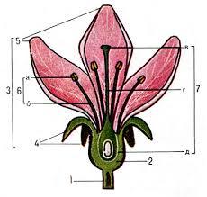 Итоговая контрольная по биологии класс учебник Пономаревой  6 hello html m269b2076 png
