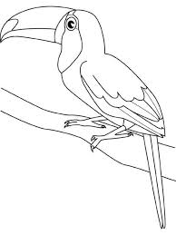 Small Picture Toucan Bird Coloring Page Animal Coloring pages of