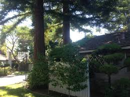 pics] Redwood trees too close to the house? (growing, 2014, vines ...