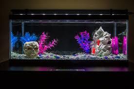 fish tank lighting ideas. led aquarium and fish tank lighting familyroom ideas u