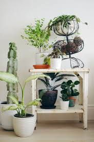 Tips for Keeping Indoor Plants Alive \u2013 A Beautiful Mess