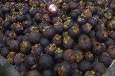 Biblical Fig Tree In Kerala U2013 SundayfarmerKerala Fruit Trees