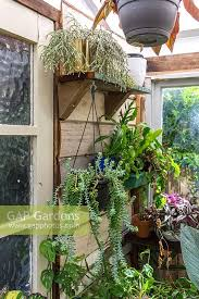 shelves of succulents and hanging plants in conservatory