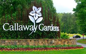 callaway gardens hires new ceo with resort theme park background columbus ledger enquirer