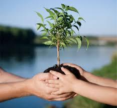 Resultado de imagem para dia da consciência ecológica