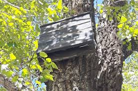 this bat box in bowness park has an open bottom to prevent guano or bat from aculating inside excessive in a bat box can eventually drive