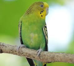 Green Love Bird wallpaper by ...