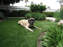 artificial grass for pets. Our \u201cFrass\u201d Mascott Likes His Fake Grass. Artificial Grass For Pets