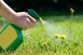 expert gardener weed and feed. Perfect And Expert Gardener Potting Mix Weed And Feed Ideas Picture  Landscaping  In Expert Gardener Weed And Feed Q