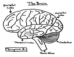 Brain Structure And Function Worksheet 10 brain structure and function worksheet on negative positive numbers worksheets