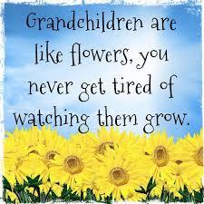 Quotes About Grandchildren Adorable Interesting Grandchildren Quotes About Grandchildren Are Like