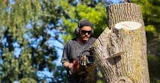 Advantages of Hiring a Tree Removal Service - Mass News