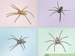 Right Arachnid Identification Chart 2019