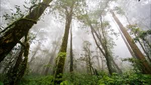 tropical rainforest raining. Brilliant Tropical Rainforest  Rainfall For Tropical Raining S