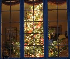 What Size Christmas Tree Should I Buy  Scottish Christmas TreesChristmas Tree In Window