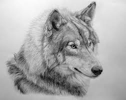 как нарисовать морду волка карандашом поэтапно