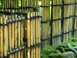 Small Picture 92 best bamboo images on Pinterest