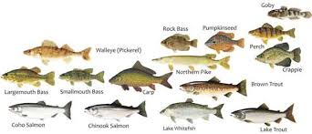 Types Of Bass Fish Chart Where To Fish Norfolk County Tourism