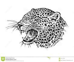 японский одичалый леопард кот азиата портрета профиль головы или