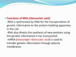 Functions Of Nucleic Acids Nucleic Acid