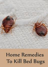 home remes to kill bed bugs creative image what chemical kills bed bugs what