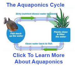 aquaponic gardening. aquaponics system aquaponic gardening