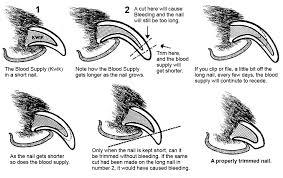 nail t diagram