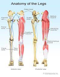 leg pain symptoms treatments causes
