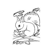 Squirrel Coloring Page Gabrielbullclub