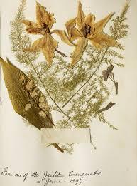 Flower Pressed Paper Queen Victoria Online Scrapbook