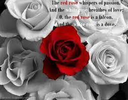 Quotes About Roses And Beauty Best of Latest Most Beautiful Red Rose Pictures With Romantic Love Quotes