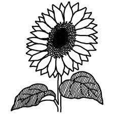 ヒマワリ向日葵3夏の花無料白黒イラスト素材