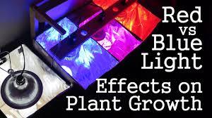 Experiment Red Light Vs Blue Light How Spectrums Affect Plant Growth Led Vs Cfl