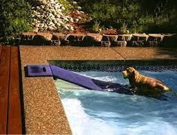 a floating dog ramp maybe one day we