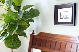 making a home adding easy and affordable houseplants to your space the large leaf house plants