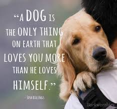 Quotes About Dogs Love Gorgeous Unconditional Love That's What's So Beautiful About A Dog It Will