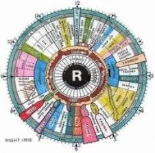 Iridology Chart Pdf Iris Reading Chart Bedowntowndaytona Com